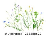 wildflowers isolated on white | Shutterstock . vector #298888622