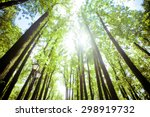 trees in the forest   crown of... | Shutterstock . vector #298919732