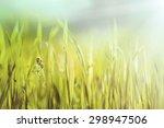 Closeup Fresh Green Grass ...
