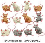 Mouse And Rat In Different...