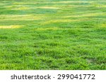 image of grass field with dew... | Shutterstock . vector #299041772