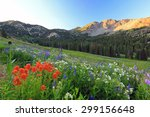 Mountain meadow with wildflowers, Alta, Utah, USA. - stock photo