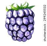 watercolor drawing blackberry ... | Shutterstock . vector #299245532