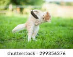 Stock photo little funny kitten playing with a caught mouse 299356376