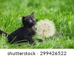 Stock photo little kitten with big dandelion with seeds 299426522