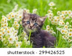 Stock photo little kitten in the camomile flowers 299426525