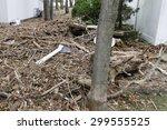 staten island  usa   november 4 ... | Shutterstock . vector #299555525