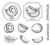 hand drawn coconut set. vintage ... | Shutterstock .eps vector #299819228