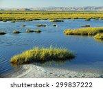 coastal marsh land in san...   Shutterstock . vector #299837222