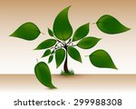 green tree with big leaves... | Shutterstock .eps vector #299988308