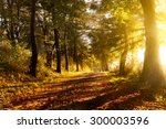 sunset on a forest path in... | Shutterstock . vector #300003596