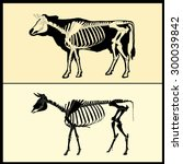 Cow Skeleton With Silhouette