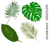 vector set with tropical exotic ... | Shutterstock .eps vector #300231242