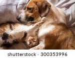 Stock photo dog and cat cuddle on bed 300353996