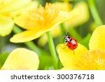 Red Ladybug On Yellow Flower....