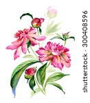 watercolor illustration of a... | Shutterstock . vector #300408596