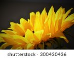 Large Yellow Sunflower Bloom...
