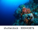 soft coral colors in the... | Shutterstock . vector #300443876