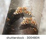 colorful moths eating sap from... | Shutterstock . vector #3004804