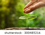 hand nurturing and watering a... | Shutterstock . vector #300485216
