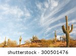 Cactus At Sunrise In Saguaro...