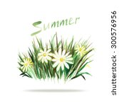 watercolor picture summer grass ... | Shutterstock . vector #300576956