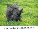 Stock photo baby elephants playing masai mara kenya 300585818