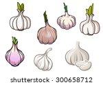 set of white and gray garlic... | Shutterstock .eps vector #300658712
