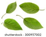 apple leaf set isolated on... | Shutterstock . vector #300957002