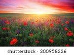field with grass  violet... | Shutterstock . vector #300958226