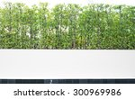 outdoor white fence hedge and... | Shutterstock . vector #300969986