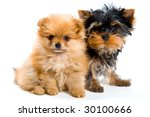 Two puppies - stock photo