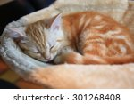 Stock photo sleeping kitten in the comfortable bed 301268408