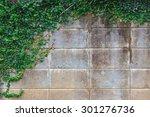 Green Creeper Tree On Wall