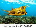 Tropical Sea Fish   Longhorn...