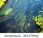 forest river algae in cold... | Shutterstock . vector #301374962