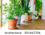 a plant pot displayed in the... | Shutterstock . vector #301462706