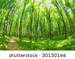 green forest | Shutterstock . vector #30150166