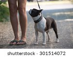 Stock photo with the dog in the city 301514072