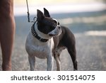 Stock photo with the dog in the city 301514075