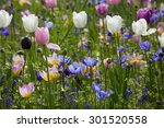 Blooming Wild Flowers On The...