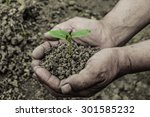 young sprout is holden by hands ... | Shutterstock . vector #301585232