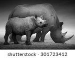 Black Rhinoceros Calf  Diceros...