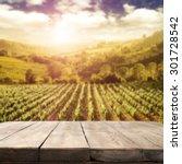 Blurred Background Of Vineyard...