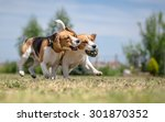 Stock photo two dogs playing with one toy 301870352