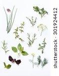fresh herbs | Shutterstock . vector #301924412