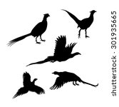 Bird Pheasant Vector Icons And...