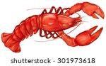 boiled lobster on a white...   Shutterstock .eps vector #301973618