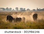 Elephants In The Chobe Nationa...