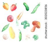 set of watercolor vegetables... | Shutterstock . vector #302023856